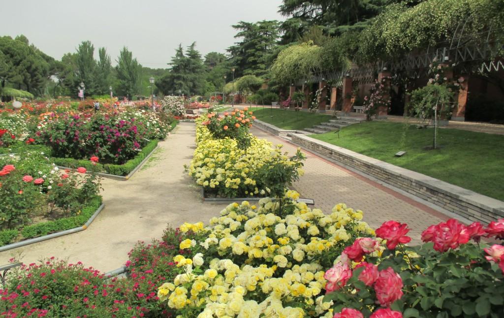 Vista General var. Comtesse du Barry. Rosaleda del Parque del Oeste de Madrid. Foto Ayto. Madrid