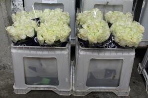 Las flores deben ponerse en agua con conservante