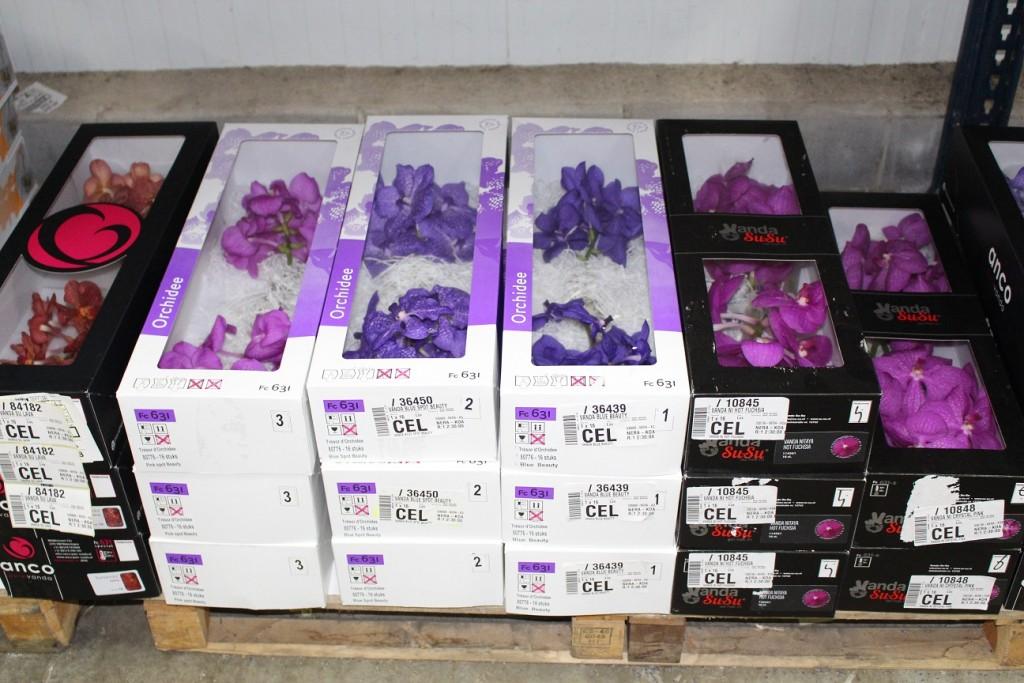 Es conveniente mantener en cajas las orquídeas Vanda conservadas en la cámara