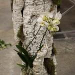 Decoración Árbol Blanco, materiales: corcho, Phalaenopsis