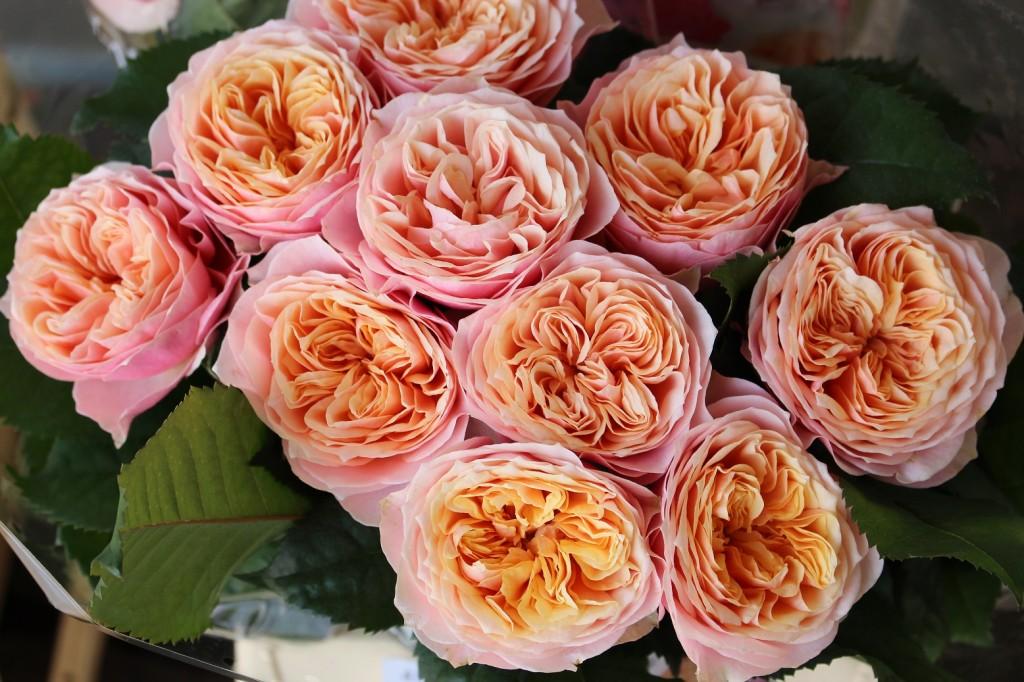 El uso de conservantes prolonga la vida de la flor cortada. En la imagen, Rosa 'Vuvuzela Salmon'