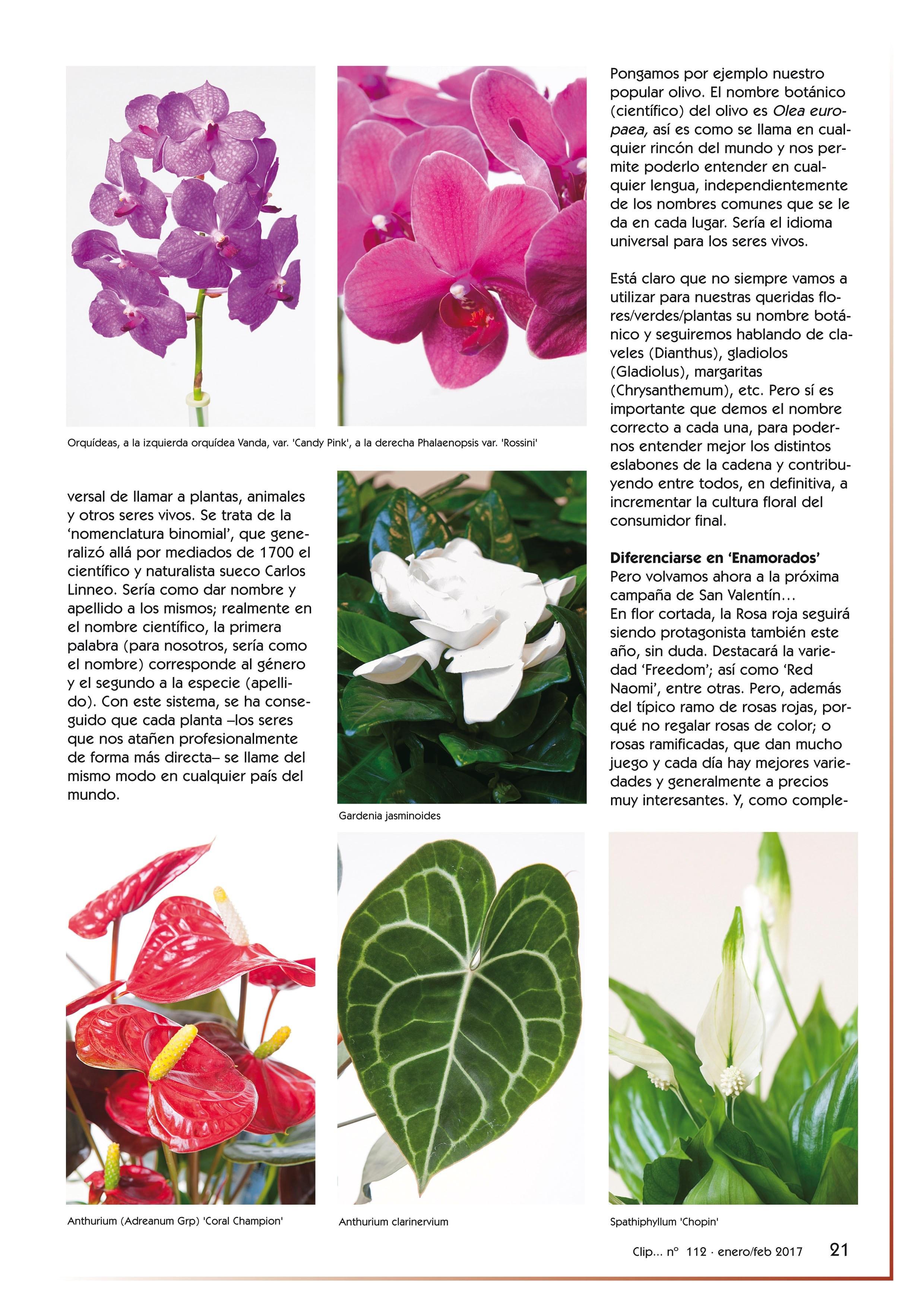 San Valentín ¿regalar flores o plantas? (clip nº 112, pág. 21)