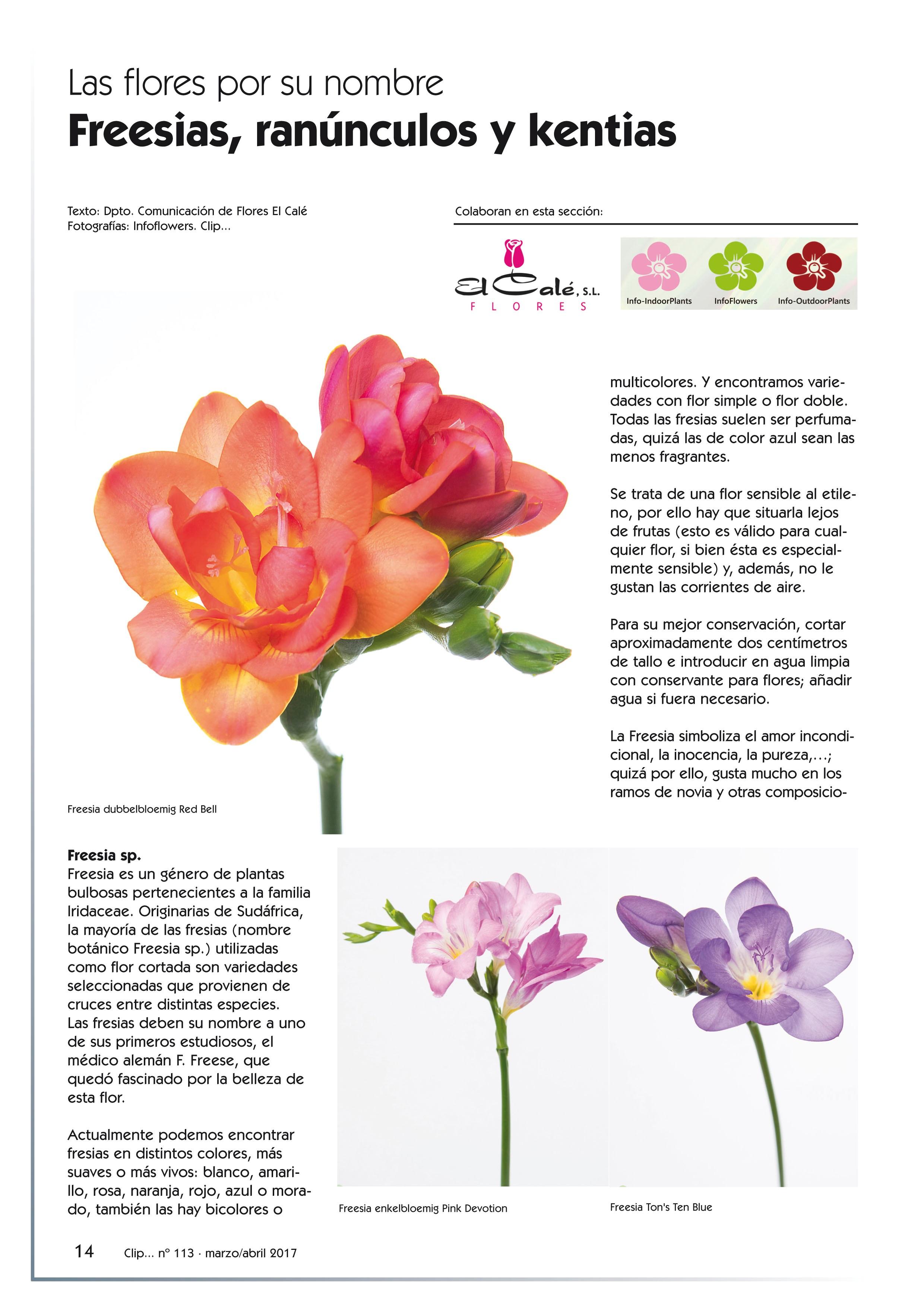 Reportaje Clip nº 113 | Blog del Florista