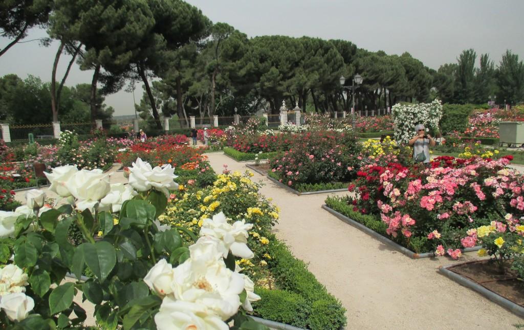 Rosaleda del Parque del Oeste de Madrid. Foto Ayto. Madrid