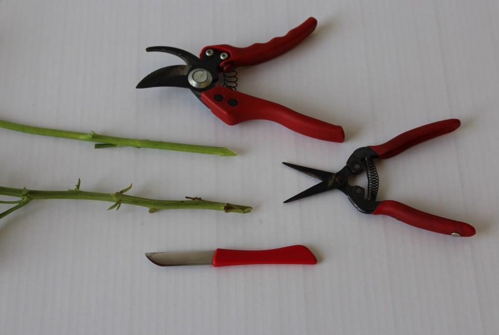 Importante cortar en bisel la parte basal de los tallos con una herramienta afilada