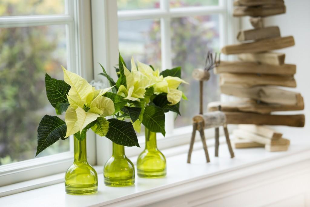Discretos elementos en el alféizar de las ventanas: poinsettias blancas en delicados recipientes de cristal en color verde. Para un mayor efecto se colocan varios vasos idénticos uno al lado del otro